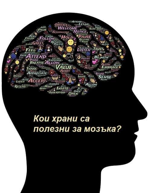кои храни са полезни за мозъка